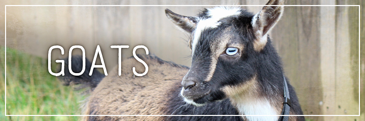 Ridgetop Farm and Garden | Farm Animals | Goats