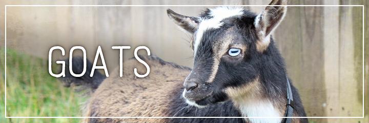 Ridgetop Farm and Garden | Farm Animals | Goats