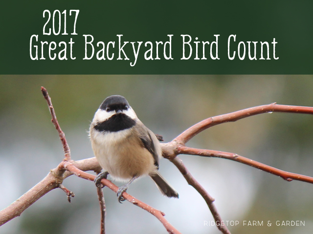 Ridgetop Farm and Garden | 2017 Great Backyard Bird Count | GBBC