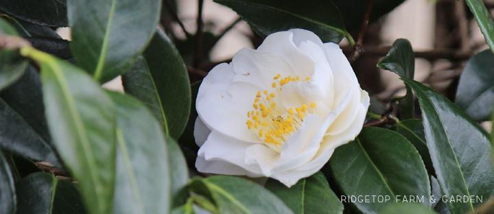 Ridgetop Farm and Garden | Bloom Day