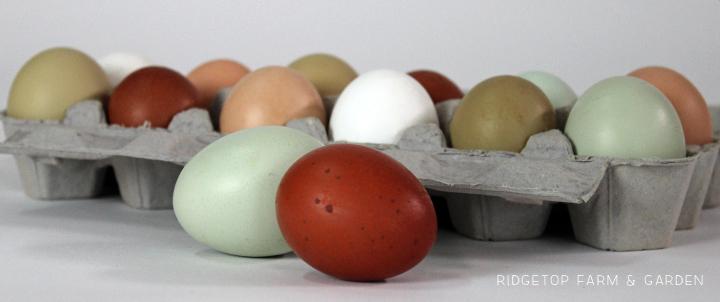 Ridgetop Farm and Garden | Recipe | Steam Eggs