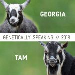 2018 Georgia & Tam Breeding