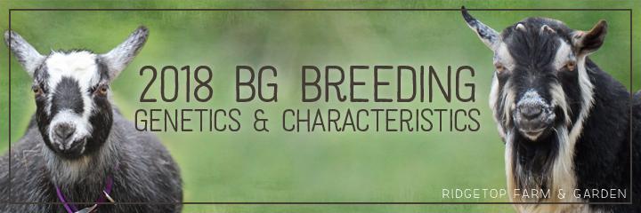 Ridgetop Farm and Garden | Georgia and Tam 2018 Breeding