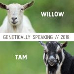 2018 Willow & Tam Breeding