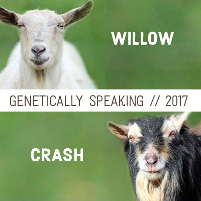 2017 Willow & Crash Breeding