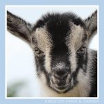 2018 Goats for Sale