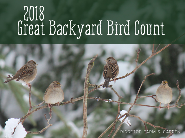 Ridgetop Farm and Garden | 2018 Great Backyard Bird Count