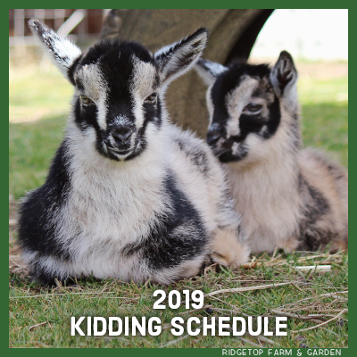 2019 Kidding Schedule