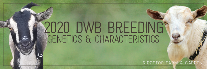 2020 Betty & Wingman Breeding | Ridgetop Farm and Garden
