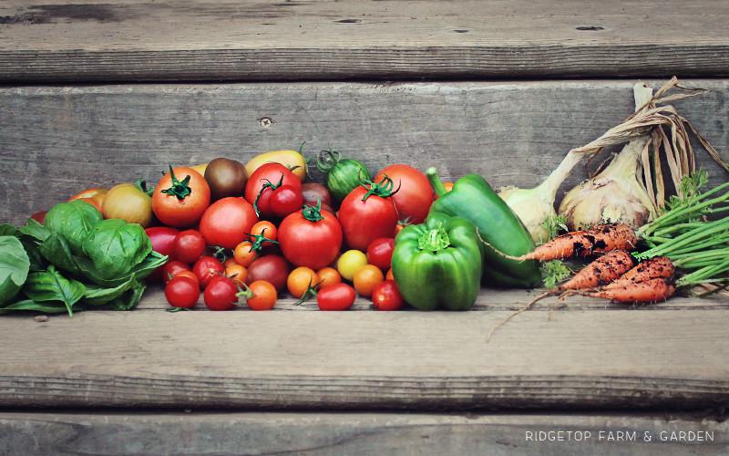 Summer Harvest Slide