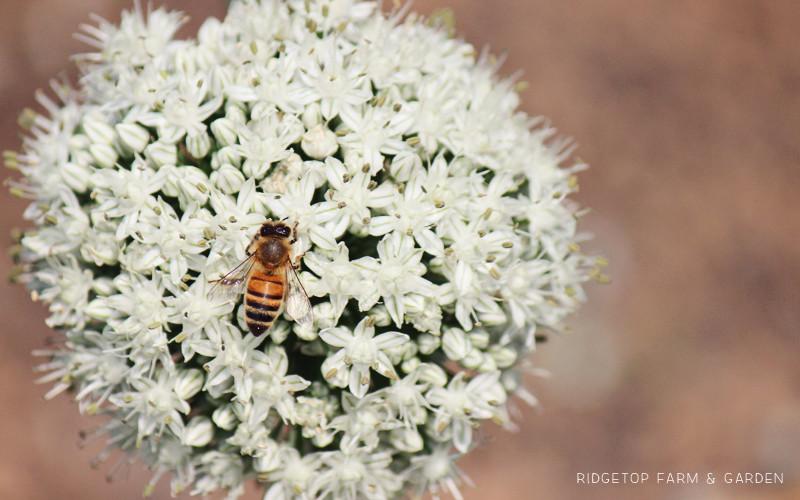 Bee Slide