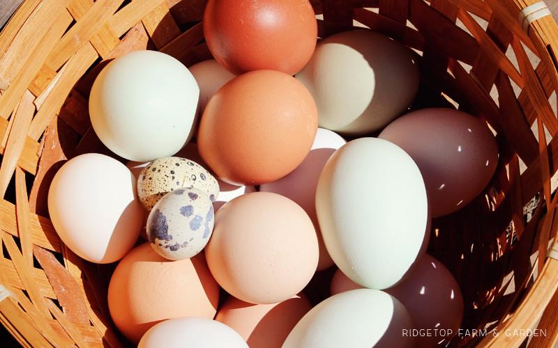 Eggs Slide