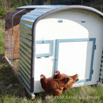 Our Chicken Tractors