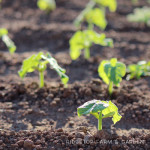 How Our Garden Grows – June 2014