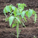 How Our Garden Grows – May 2015