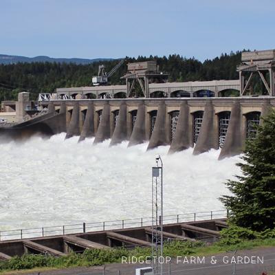 Visiting Bonneville Dam