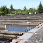 Visiting Bonneville Fish Hatchery