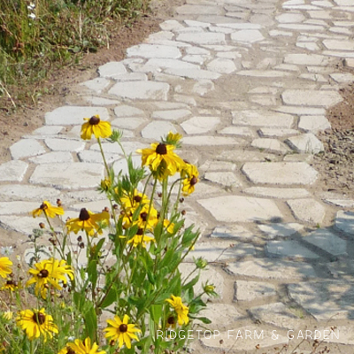 DIY Concrete Path