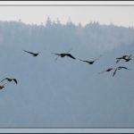 Birds of 2013: Week 52