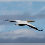 Birds of 2013: Week 37