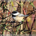 Birds of 2013: Week 3