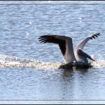 Birds of 2013: Week 43
