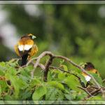 Birds of 2013: Week 20