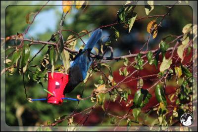 Birds of 2013: Weeks 45 – 47