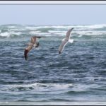 Birds of 2013: Week 24