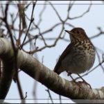 Birds of 2013: Weeks 48 – 49
