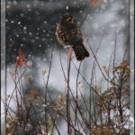 Birds of 2013: Week 51