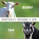 2018 Bunny & Tam Breeding