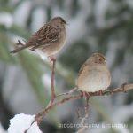 2018 Great Backyard Bird Count