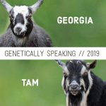 2019 Georgia & Tam Breeding