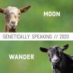 2020 Moon & Wander Breeding