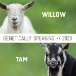 2020 Willow & Tam Breeding