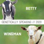 2020 Betty & Wingman Breeding