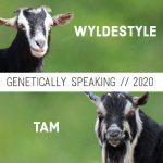 2020 WyldeStyle & Tam Breeding